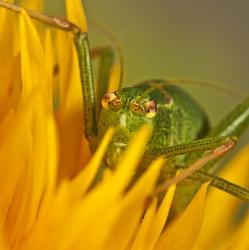 A cricket