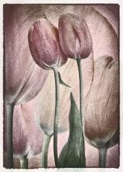 Tulips_1