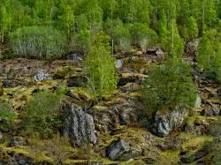 NORWAY SPRING_1