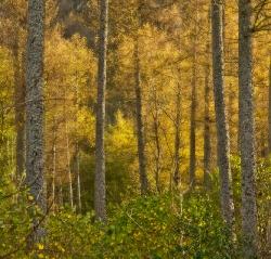 Autumn (Lake District)
