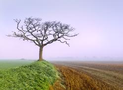 Foggy dawn (Near Norwich)