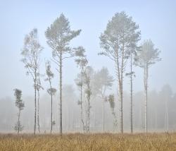 Autmn foggy morwich (Near Norwich)