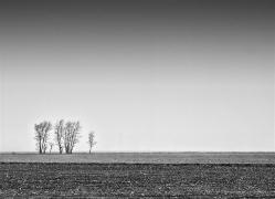 Grafics of spring fields (Sweeden)